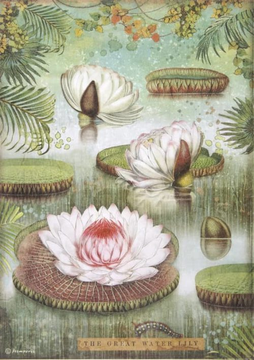 Rice Paper - Amazonia water lily