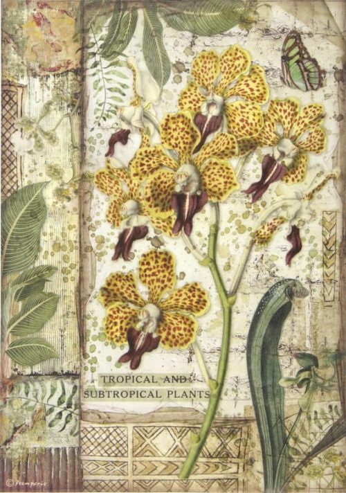 Rice Paper - Amazonia orchid