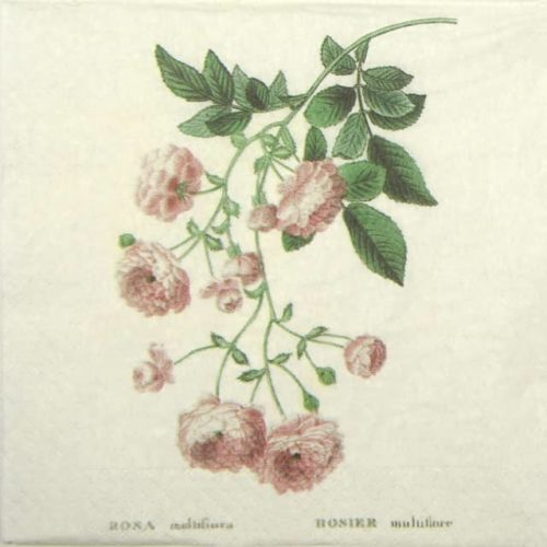 Paper Napkin - Rosier
